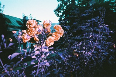 LOMOGRAPHY SIMPLE USE CAMERA - LOMOCHROME PURPLE